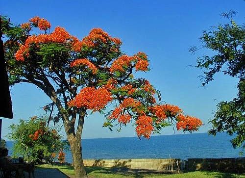 Malawi, http://www.africaguide.com (Vera Cheal)