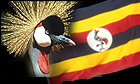 The Crested Crane, Uganda's National Symbol.