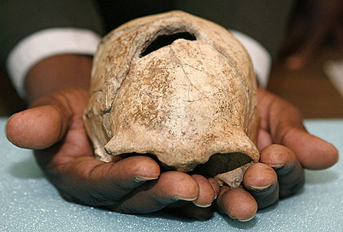 Homo Erectus Skull from Kenyan National Museum... the first chess brain?