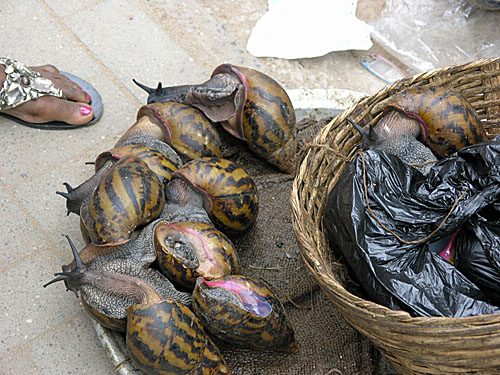 Snails being sold at the bazaar... illegally.
